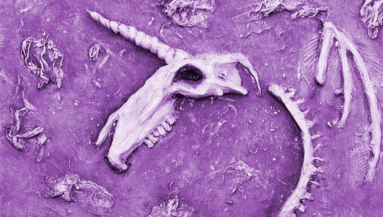 cráneo fosilizado de unicornio